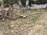 Playful Panda Takes A Tumble After Lunch