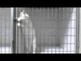 Prison Break - This Cat Got Skills!