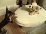 Puppy Love On The Toilet