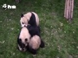Panda Trio Goes To War