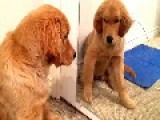 Puppy High Fives Himself In The Mirror