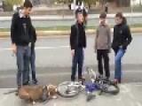 Pitbull Hates Bike Tires