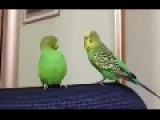 Parrot Couple Having An Argument On Couch At Home