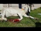 Puss In The Boots - Gary The Goat Goes Under The Knife