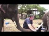 Peter The Elephant Paints A Piano And Pianist
