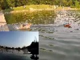 Remote Controlled Toy Speed Boat Vs Dog