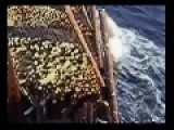 Russian Sailors Lose Their Timber