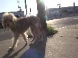 Rescuing A Dog Standing In The Middle Of The Street In South Central Los Angeles. Please Share