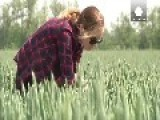 Russian Wheat Production Could Fall Without Rain