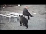 Russians Up-close With Bears Compilation