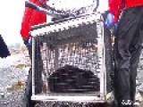 Rescue Of A Sea Otter In Distress