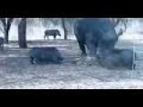 Rhino Attack Warthog