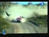Rally Car Hits Horse