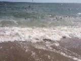 Rare Shark Feeding Frenzy At Cape Lookout National Seashore, North Carolina