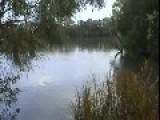 RC Submarine Attacks A Duck