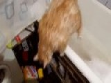 Red Cat In The Bathroom