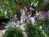 Reverse Garden Say