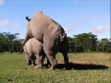 Rhino Mating With Twist