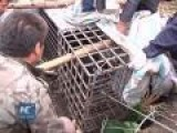 Russian Black Bears Captured After Swimming Across Border River Into China