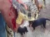 Redneck Reptile Abuse