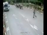 Rhinos Fleeing While Security Slept In Zoo In Tel Aviv - Israel