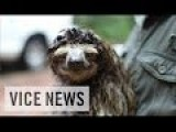 Rain Forests Have Sloths And Fungus For Medicines And Cures