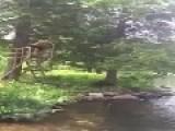 Rope Swing Breaks