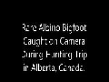 Rare Albino Bigfoot Caught On Camera