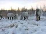 Russian Horseman Praises America - Applauds US Military - Spoof