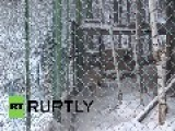 Russia: See Zoo Animals Keep Their Cool In Brutal Siberian Winter