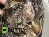Russia: This 'miracle' Cat Just Survived A Knife In Its SKULL