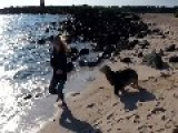 Sea Lion Wants To Play Chase At The Beach