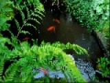Small Garden And Goldfish Talk