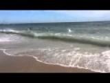 Shark Feeding Frenzy On The Beach