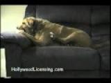 Schizophrenic Dog