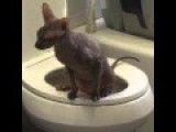 Sphinx Cat Pees Like A Human