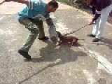 Small Dog Attack Training