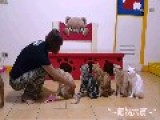 Six Cute Cats Queue For Grooming