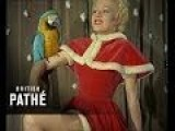 Sexy Ladies Mix With Animals For Kinky Christmas Card Collection! 1955 Colour Footage