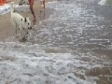 Snappy Dog Battles With The Sea