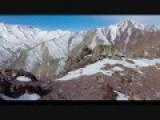 Snow Leopard Roaring