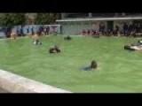 Swimming Basic Training With Gun