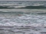 Shark Wanders Into Shallow Waters At North Carolina Beach