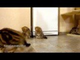 So Cute Kittens Playing With Soap Bubbles !! Adorable Cats