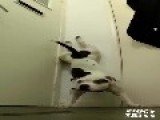 Staffordshire Bull Terrier Performs Handstand