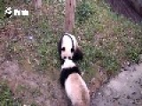 Sneaky Panda Steals Apple