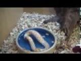 Snake Eating Itself