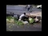 Shocking Video Of An Indian Man Washing Vegetables In Sewer Water