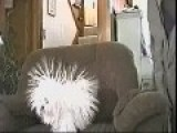 Static Dog Charging !