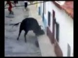 Stupid Man Teases Bull And Pays The Ultimate Price